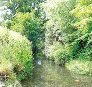 '오필리아'의 배경이 된 영국 남부 호그스밀 강.