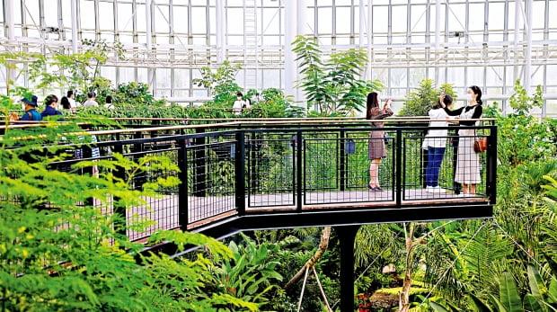 관람자들이 열대온실을 한눈에 조망할 수 있는 5.5m 높이의 나무 데크길.