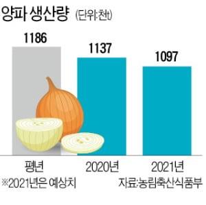 """정부 """"金양파 우려"""" vs 팜에어한경 """"안정될 듯"""""""