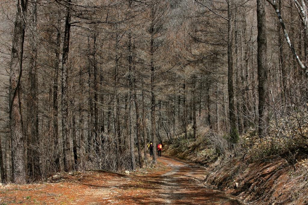 [걷고 싶은 길] 해발 1천100m 고지와 능선을 잇는 운탄고도