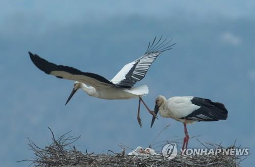 교원대, 황새 복원 25주년 기념 '황새와 습지' 발간