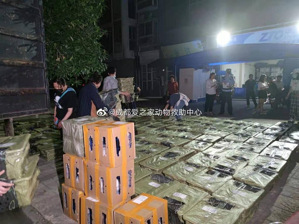 개·고양이 떼죽음 내몰뻔한 중국 반려동물 '랜덤 박스'
