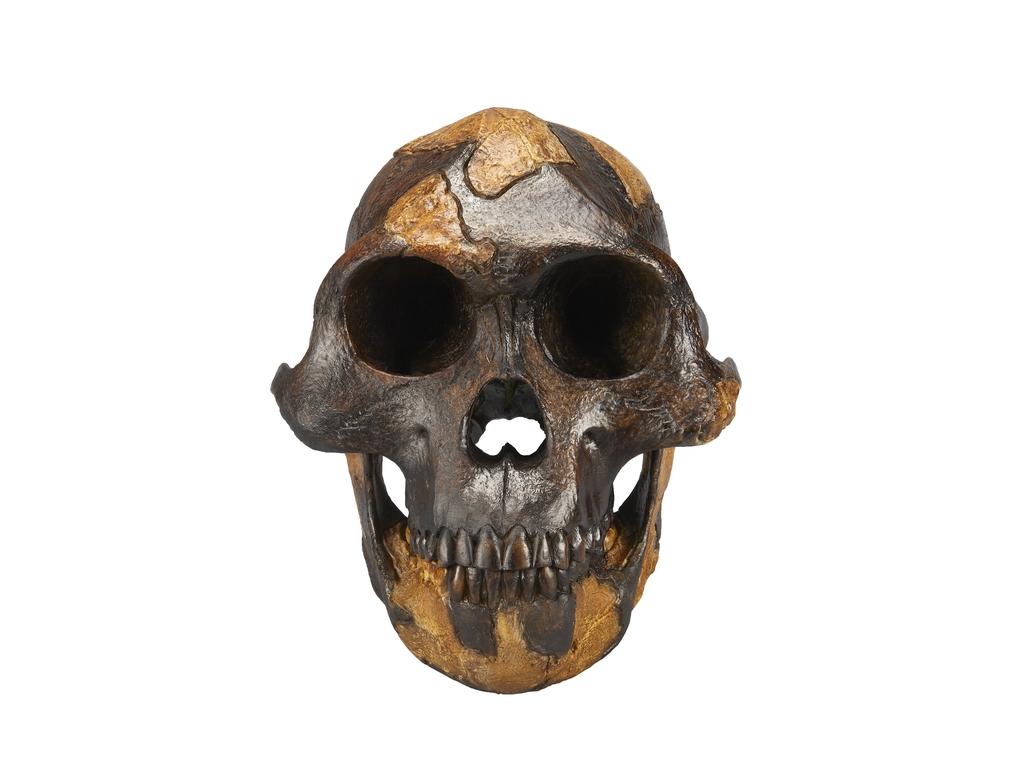 코로나 시대에 돌아보는 700만년 인류 진화의 여정