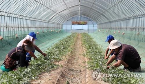 """전북도, 영농철 농촌 인력 지원 시스템 풀가동…""""일손부족 해소"""""""