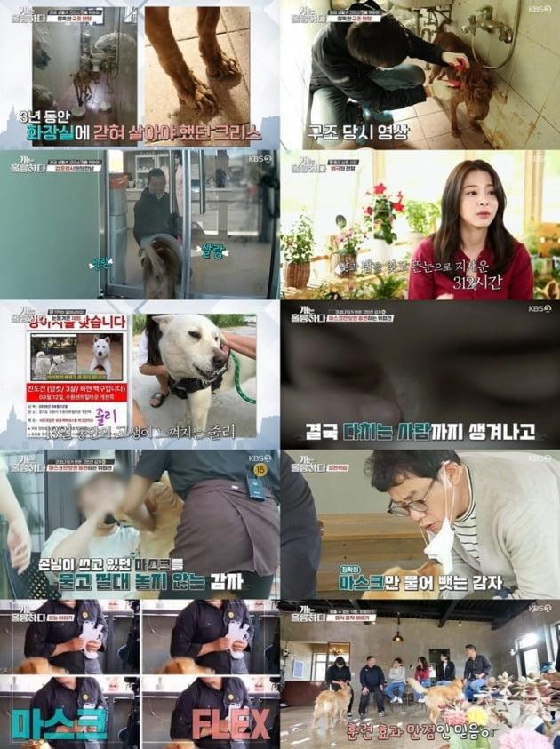 사진=KBS 2TV '개는 훌륭하다' 방송 캡처