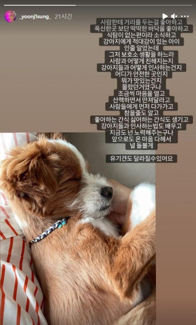 윤지성 반려견 / 사진 = 윤지성 인스타그램