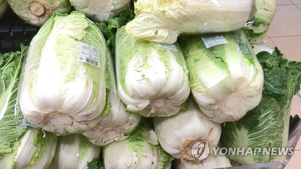 [고침] 경제(배추 도매가 1∼3월 배로 '껑충'…봄배추 나…)