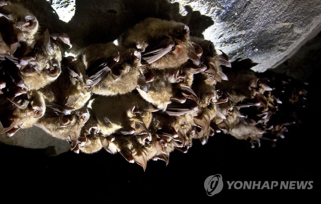 인도발 여객기서 박쥐 날아다녀 승객들 기겁…긴급 회항