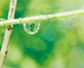 [그림이 있는 아침] 물방울의 찰나적 아름다움…이영수 '자연의 이미지'