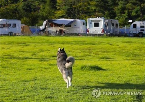 """""""반려견과 1박2일 즐겨요""""…임실군, 6월 주말마다 '차박 캠핑'"""