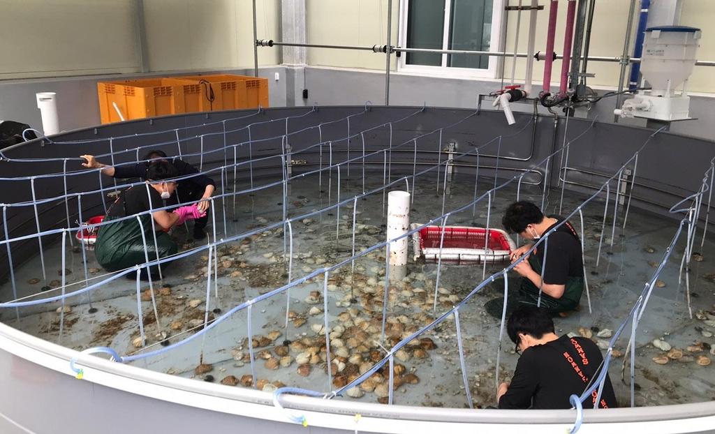 경기도, 어린 주꾸미 15만 마리 서해에 방류