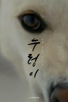 미드 '프렌즈' 감독이 조명한 한국 개고기 산업…다큐 '누렁이'