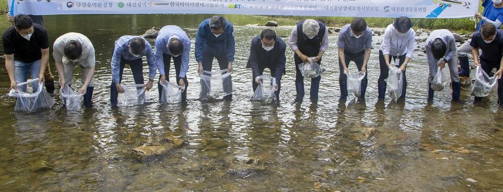 멸종위기 감돌고기 1천500마리, 유등천서 '새 집 마련'