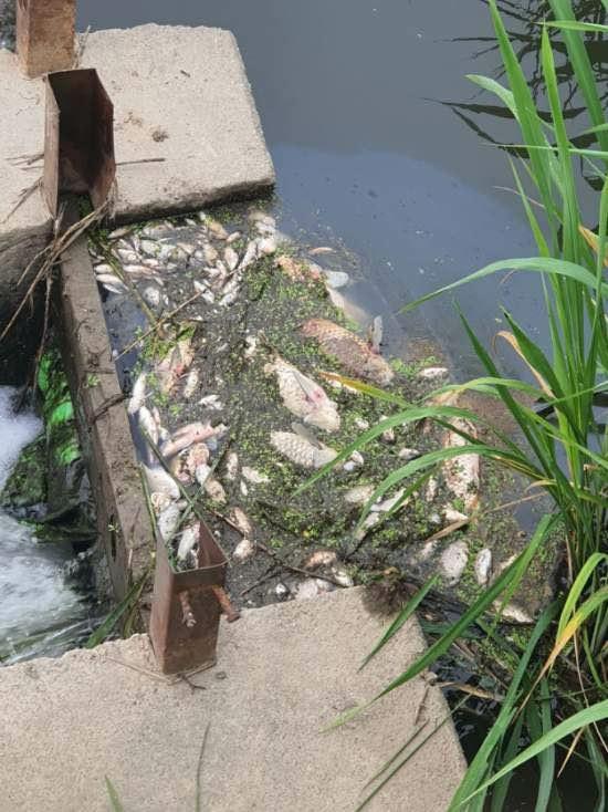 쿠팡물류센터 화재현장 인근 하천서 물고기 1천여마리 떼죽음