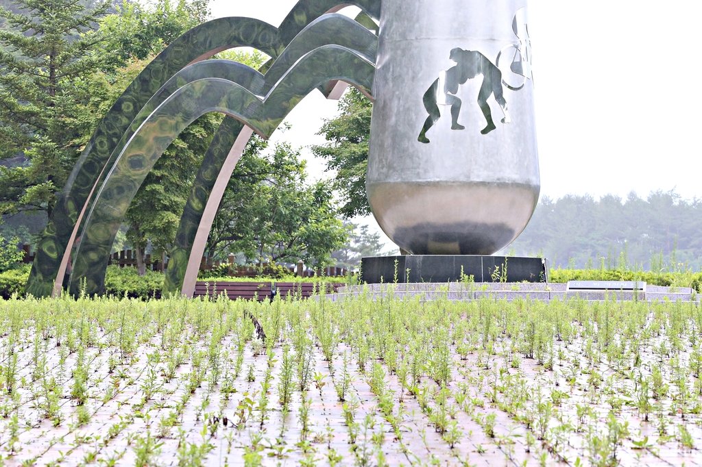 잡초밭이 21세기 고원 스포츠 도시 태백시를 상징?