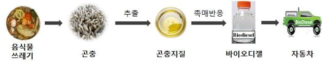 한국석유관리원, 곤충 바이오디젤 제조 기술 확보