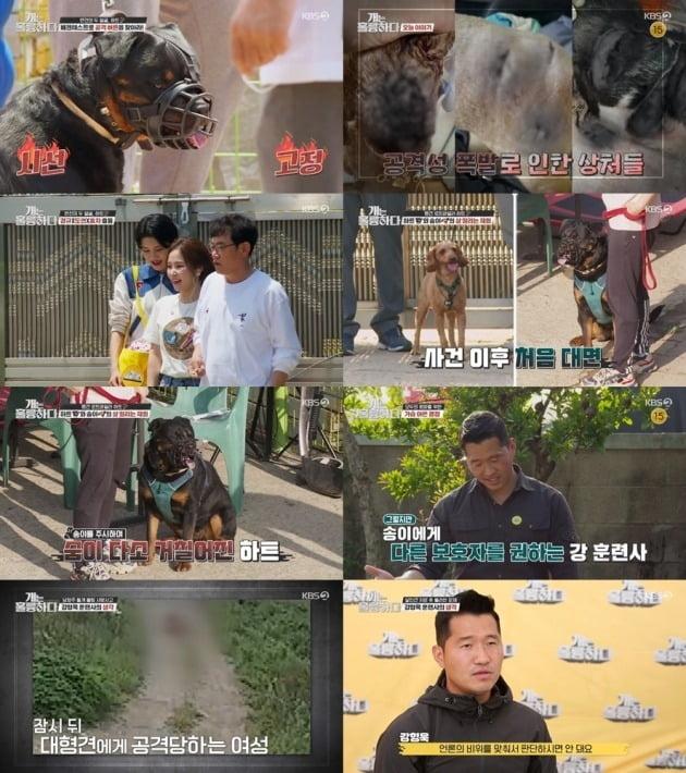 사진=KBS2 '개훌륭' 방송 화면.