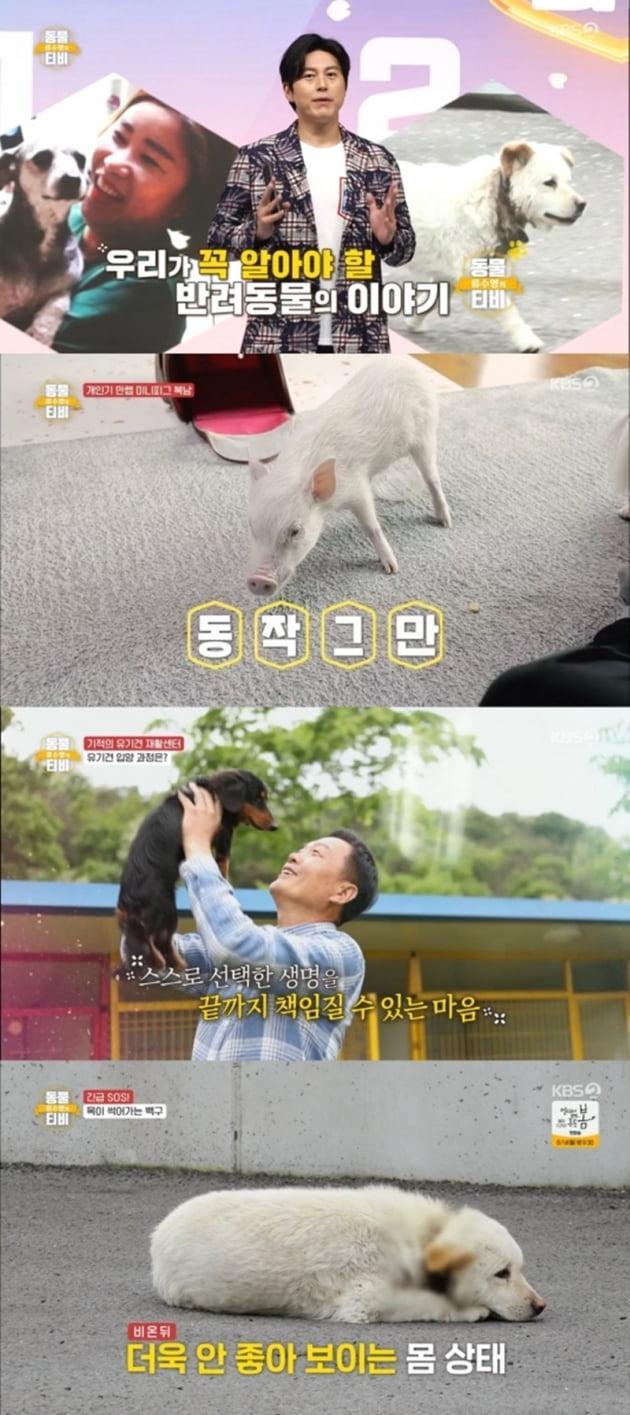 '류수영의 동물티비' / 사진 = KBS 제공