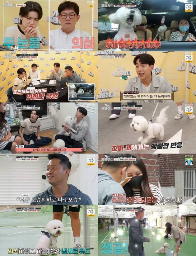 7일 방송된 '개훌륭'/ 사진=KBS2 제공