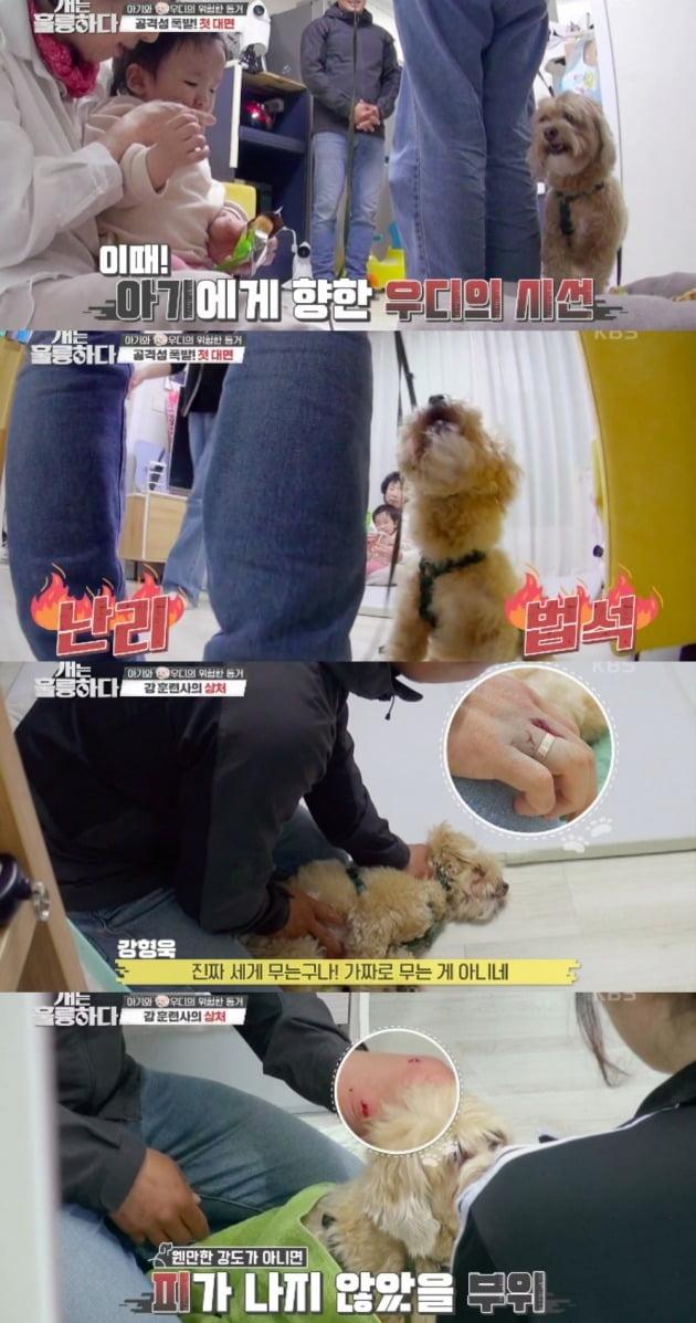사진=KBS 2TV '개는 훌륭하다' 방송화면 캡처