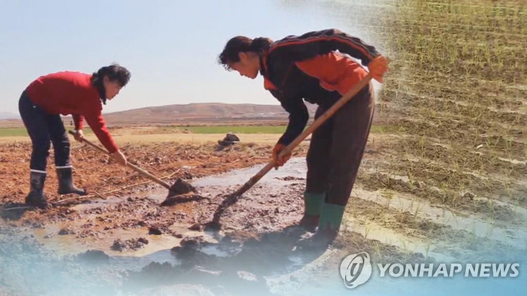 북, 식량난 해소 골몰…쌀주산지 황남에 주부 1만4천명 정착시켜