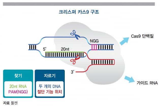 [글로벌 시장 분석] 유전자가위 기대감 폭발시킨 인텔리아