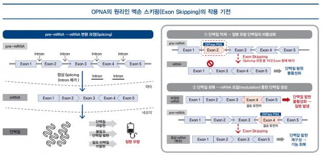 [파이프라인 아카이브] ❶ 올리패스 'OLP-1002'