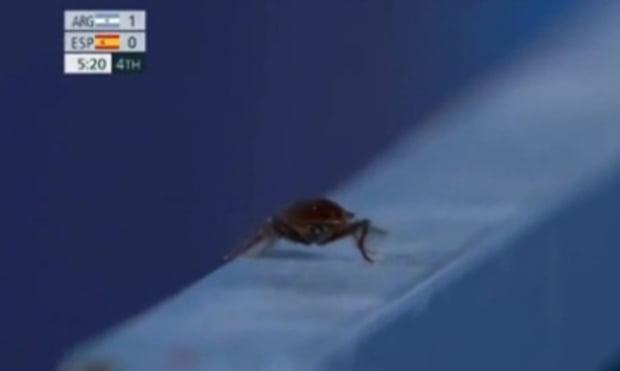 도쿄올림픽 하키 B조 아르헨티나와 스페인 경기 중계에 포착된 바퀴벌레. 사진=Tyc 스포츠 갈무리