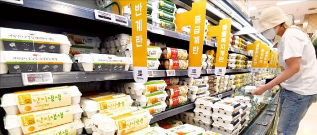 지난 5일 서울의 한 대형마트에서 소비자가 달걀을 고르고 있다. 김범준 기자