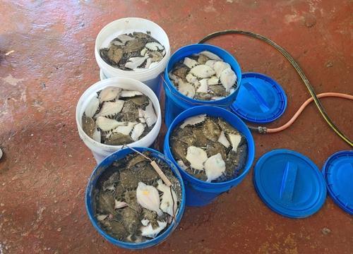 '펄펄 끓는' 육지와 바다…과수·가축·양식 피해 갈수록 확산
