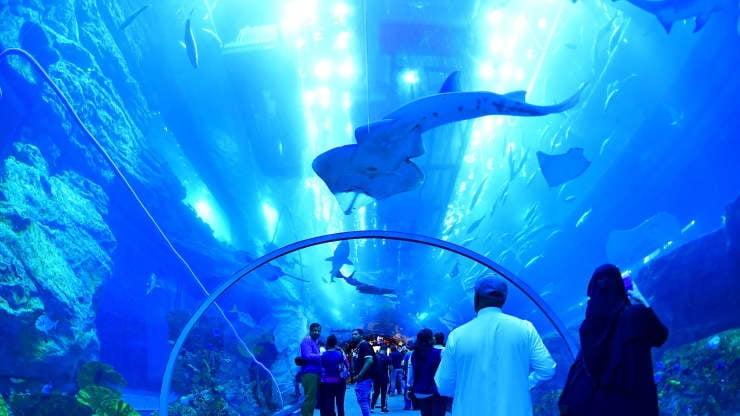 """세계에서 가장 깊은 두바이 수영장 첫선...윌스미스 """"수심 끝판왕"""""""