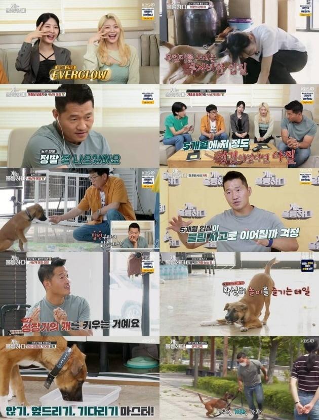 사진제공=KBS2 '개는 훌륭하다'