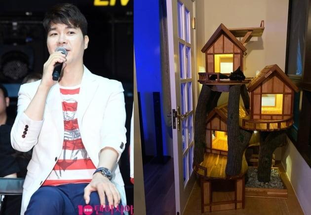박수홍이 공개한 다홍이 캣타워/ 사진=텐아시아, 인스타그램