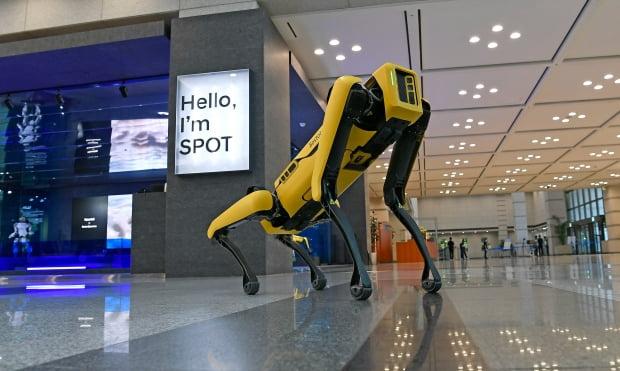 현대차가 인수한 보스턴다이내믹스의 4족 보행 로봇 스팟. 사진=현대차그룹