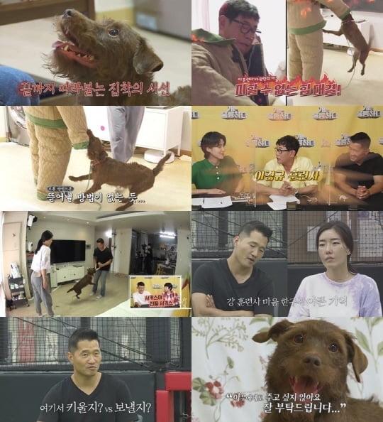 '개는 훌륭하다'(사진=KBS)