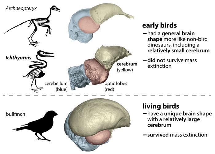 """[사이테크 플러스] """"공룡과 조류 두뇌 구조 차이가 멸종·생존 운명 갈랐다"""""""