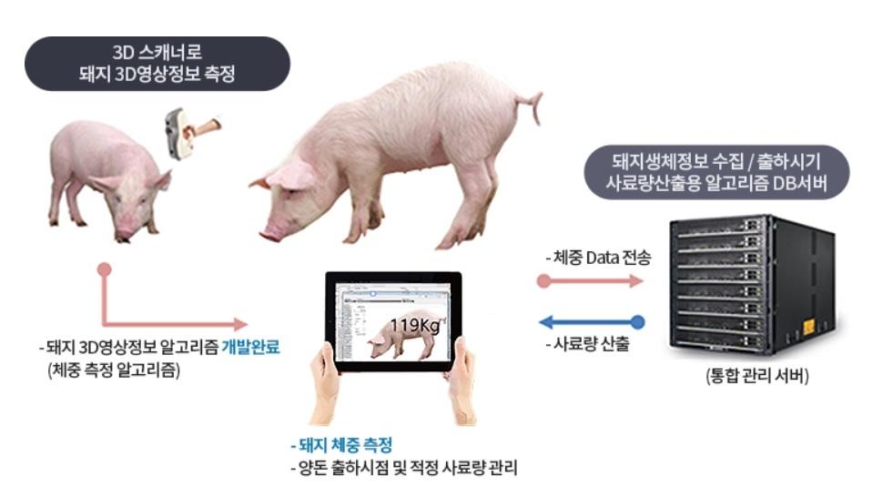 저울 대신 3D 카메라로 돼지 체중 측정…전북도, 시범 도입