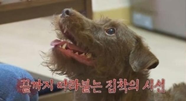 """'개훌륭' 안락사 고민하던 광란의 犬 보리, 강형욱 훈련 후 안정 """"괜찮은 개다"""" [종합]"""
