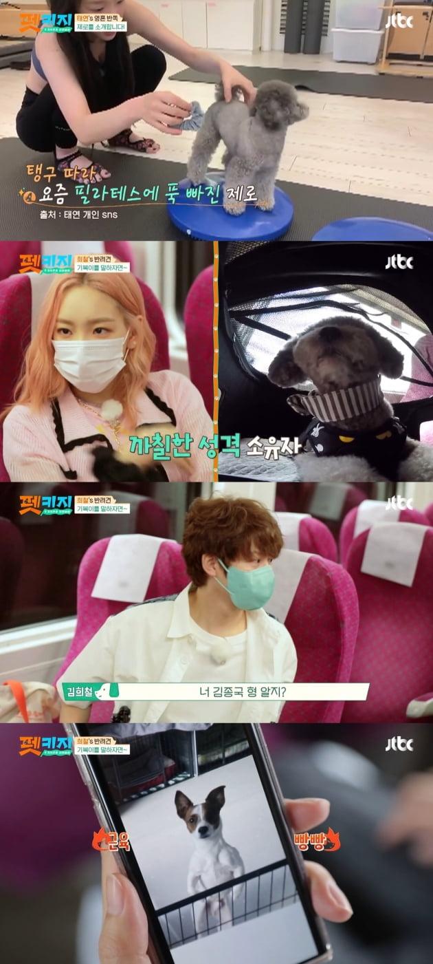 /사진=JTBC '개취존중 여행배틀 - 펫키지' 방송화면
