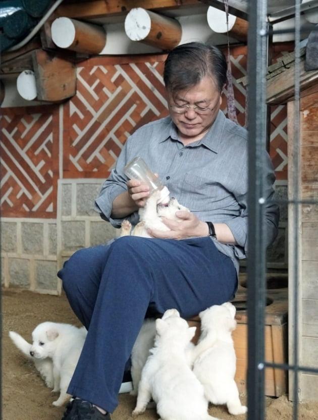 문 대통령의 '퍼스트독'…곰이가 낳은 강아지 2달만에 폭풍성장