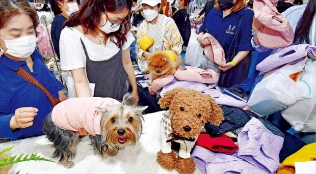 [포토] 강아지들의 '쇼핑 나들이'