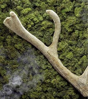 녹용 신경재생·항산화 효과, 과학적으로 증명