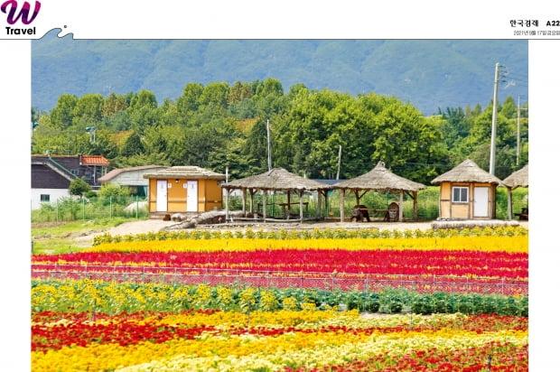 꽃으로 말해요, 당신과 걷고 싶다고…철원·고석정·꽃밭