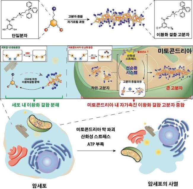 UNIST, 인공 단백질 고분자 만들어 암세포만 죽이는 기술 개발