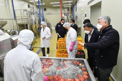 정선 사과 생산량 1만t까지 확대…농가소득 300억