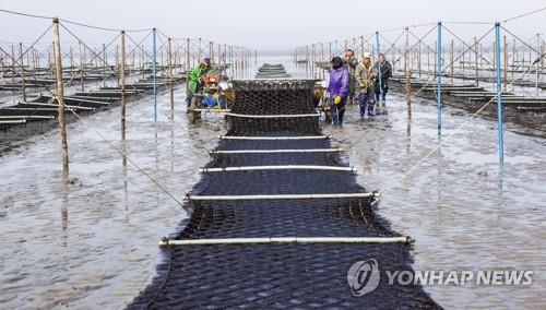 """해수부 """"김 가공업체에 에너지절감시설 지원해 전기료 51% 줄여"""""""