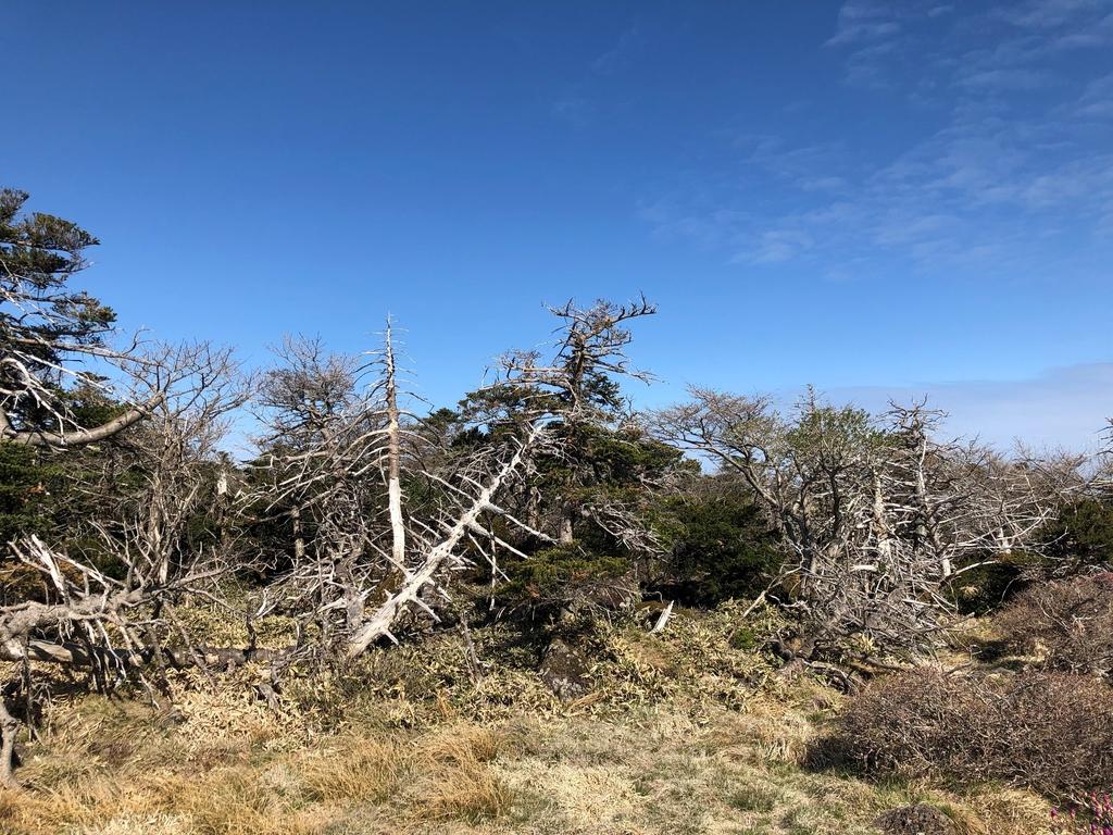 한라산 구상나무 숲 쇠퇴 '태풍·기후변화·연령구조'가 원인