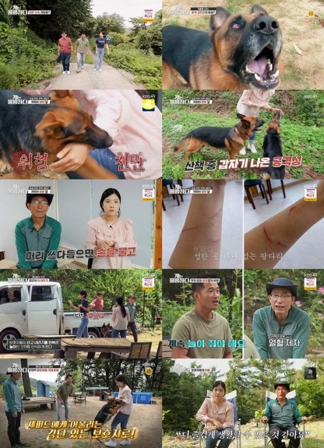 사진=KBS2 '개는 훌륭하다' 방송 화면 캡처