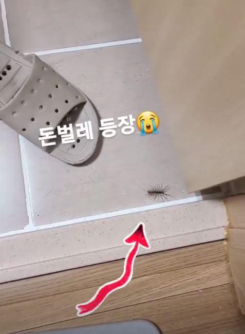 '삼둥이 만삭' 황신영, 돈벌레 보고 놀란 가슴 냉면으로 달래기 [TEN★]