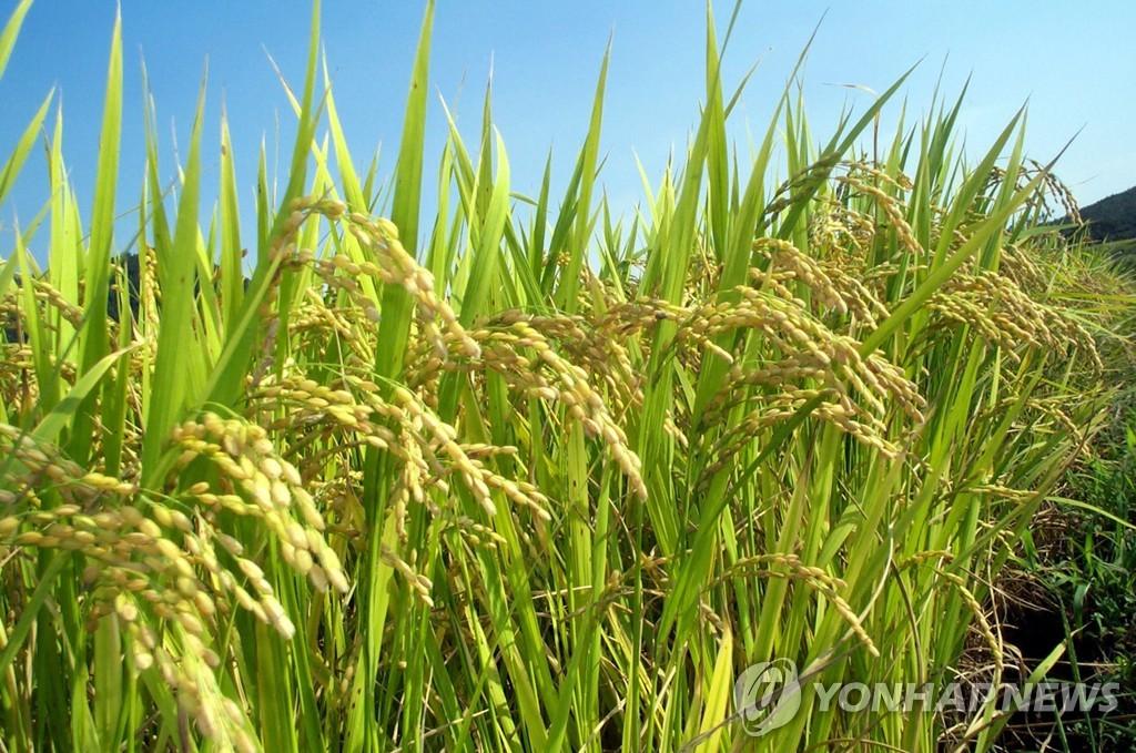 공공비축 쌀 매입량 35만→45만t 확대…2023년 소비기한 표시제 시행